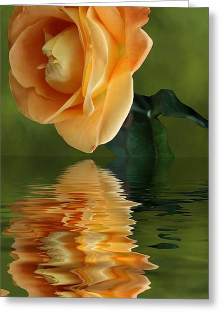 Greeting Card featuring the photograph Yellow Rose by Rick Friedle