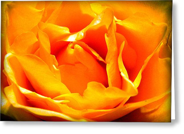 Yellow Rose Greeting Card by Susie Weaver