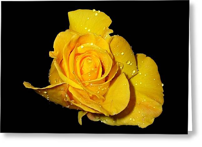 Yellow Rose With Dew Drops Greeting Card