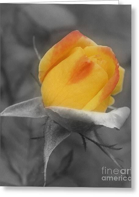 Yellow Rosebud Partial Color Greeting Card