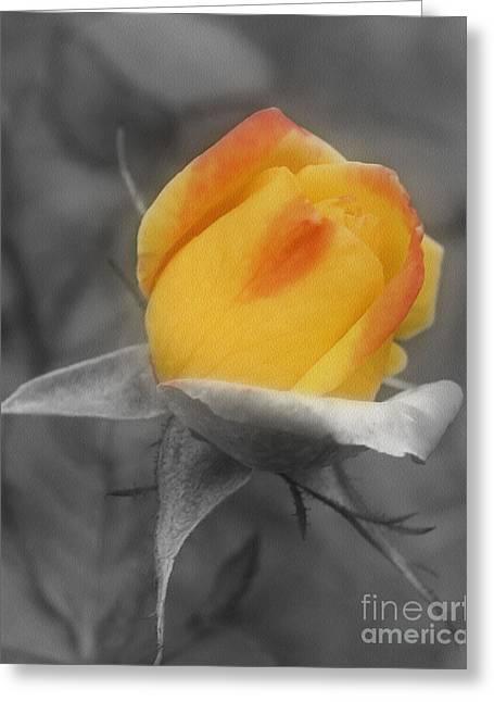 Yellow Rosebud Partial Color Greeting Card