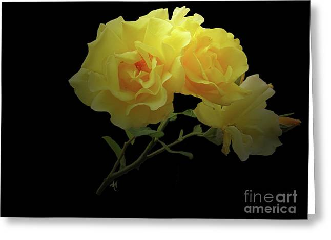 Yellow Roses On Black Greeting Card