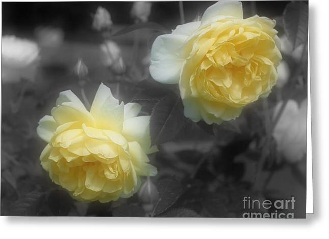 Yellow Roses Partial Color Greeting Card by Smilin Eyes Treasures