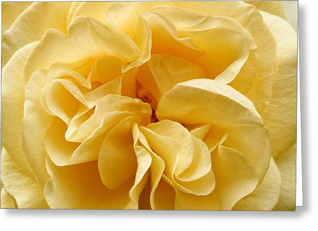 Yellow Ruffles - Rose Greeting Card