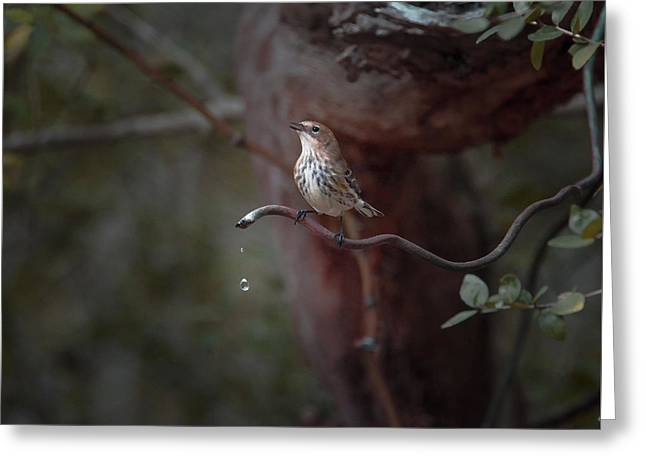 Yellow-rumped Warbler At Water Spout Greeting Card