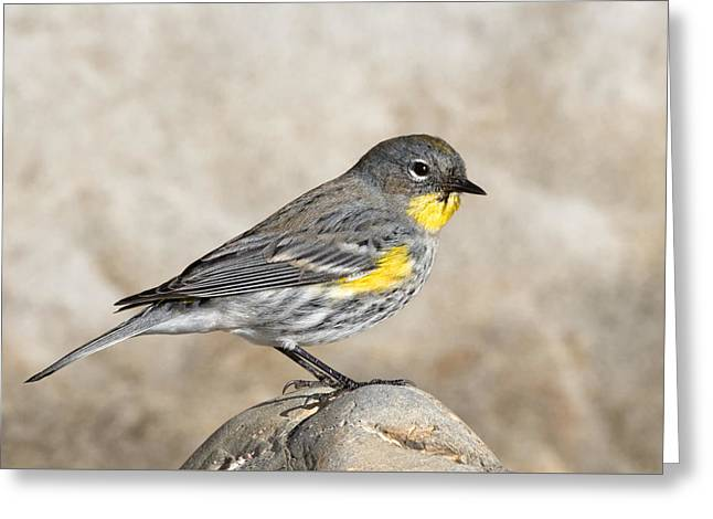 Yellow-rumped Warbler On The Beach Greeting Card