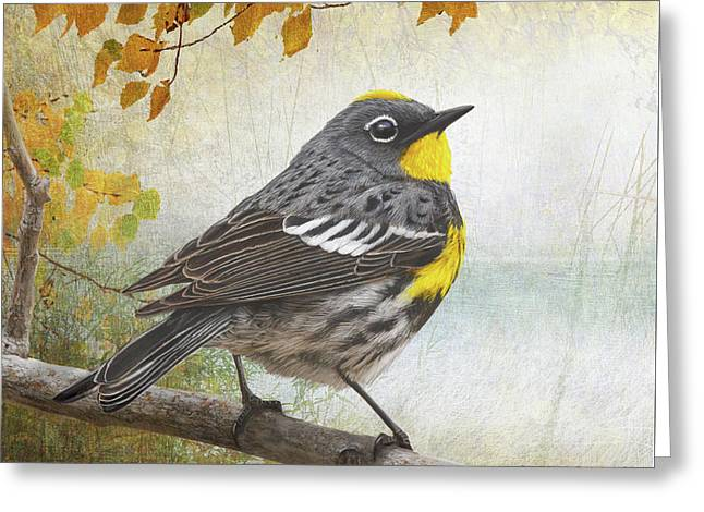 Yellow Rumped Warbler Portrait Greeting Card by R christopher Vest