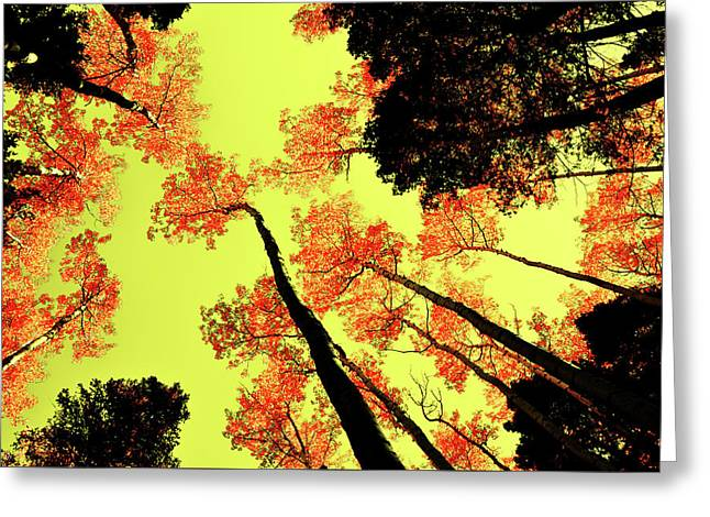 Greeting Card featuring the photograph Yellow Sky, Burning Leaves by Kevin Munro