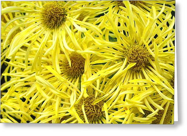 Yellow Spider Mums Greeting Card by Richard Singleton