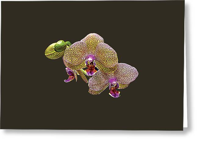Yellow Spotted Orchid Greeting Card by Susan Savad