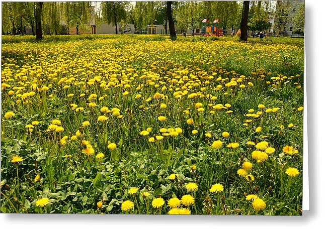 Yellow Spring Carpet Greeting Card by Henryk Gorecki