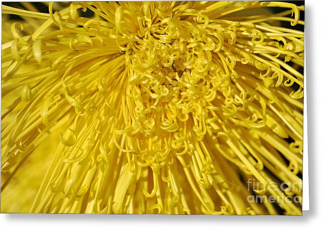Yellow Strings Greeting Card by Clayton Bruster