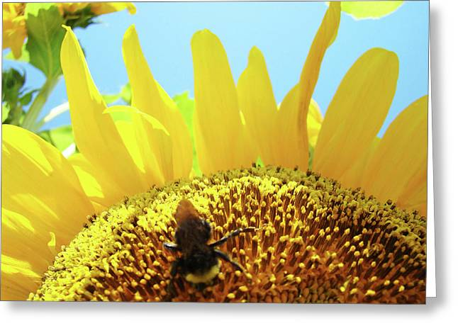 Yellow Sunflower Art Prints Bumble Bee Baslee Troutman Greeting Card by Baslee Troutman