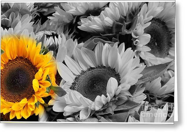 Yellow Sunflower On Black And White Greeting Card