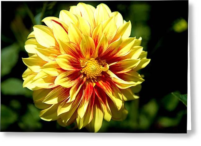 Yellow Sunshine Greeting Card
