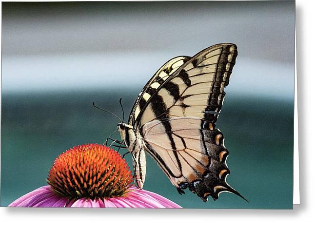 Yellow Swallowtail II Greeting Card