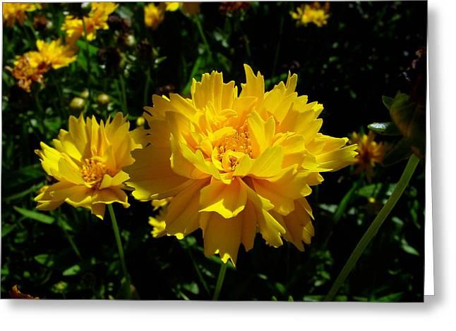 Yellow Symphony Greeting Card by Edan Chapman