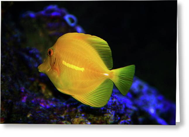 Greeting Card featuring the photograph Yellow Tang by Anthony Jones