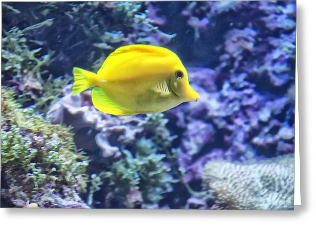 Yellow Tang Greeting Card