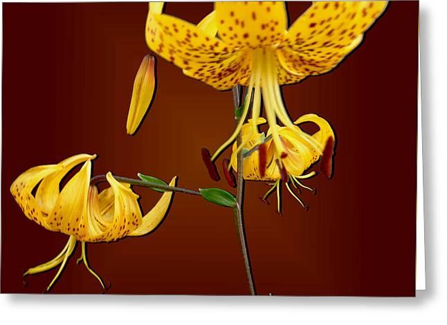 Yellow Tiger Lilies Greeting Card by Tara Hutton