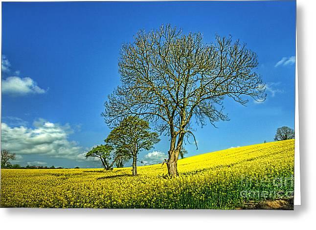 Yellow Tree Hill Greeting Card by Kim Shatwell-Irishphotographer