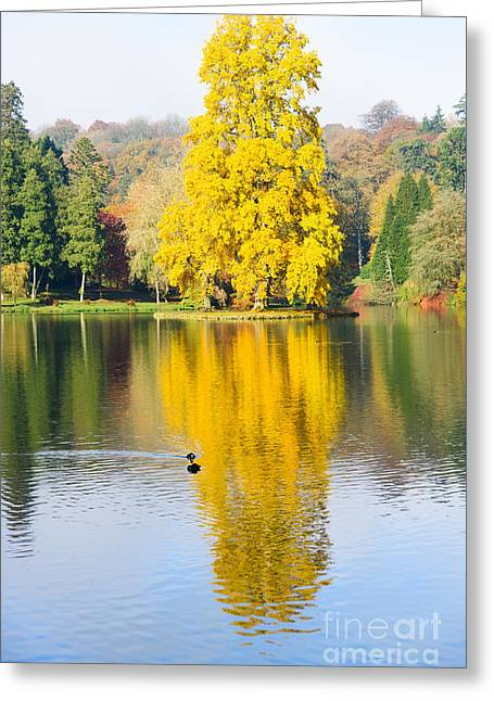 Yellow Tree Reflection Greeting Card