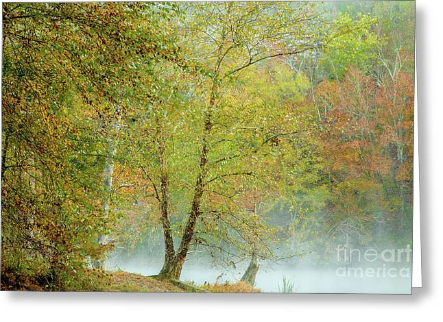 Greeting Card featuring the photograph Yellow Trees by Iris Greenwell