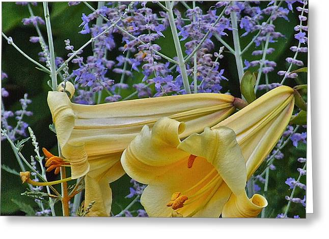 Yellow Trumpets Greeting Card by Janis Nussbaum Senungetuk
