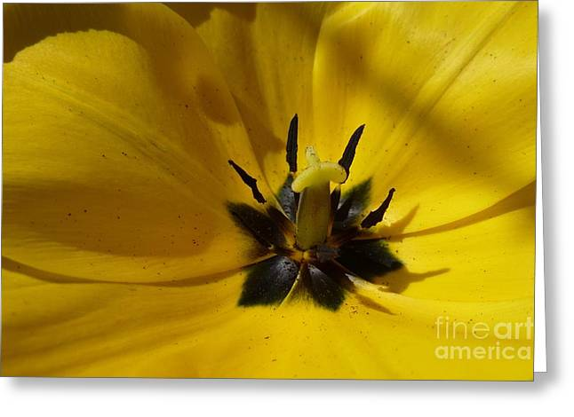 Yellow Tulip 1 Greeting Card by Jean Bernard Roussilhe