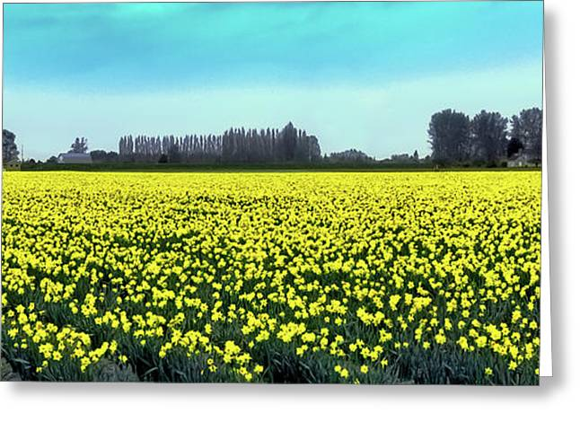 Yellow Tulip Fields Greeting Card by David Patterson