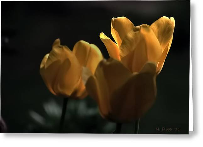 Greeting Card featuring the photograph Yellow Tulip Spotlight by Michael Flood