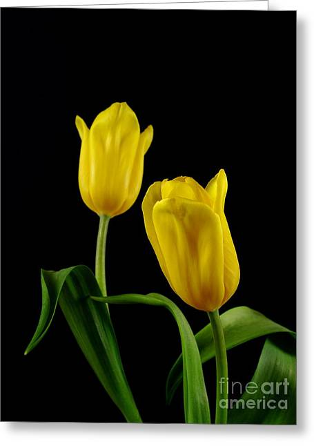 Greeting Card featuring the photograph Yellow Tulips by Dariusz Gudowicz