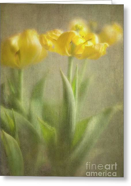 Greeting Card featuring the photograph Yellow Tulips by Elena Nosyreva