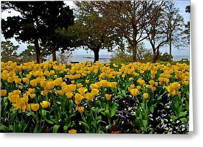 Yellow Tulips Of Fairhope Alabama Greeting Card