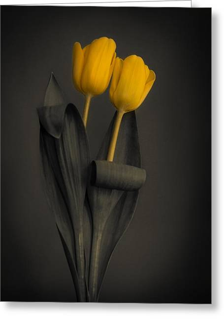 Yellow Tulips On A Grey Background Greeting Card
