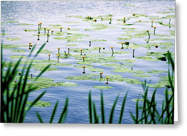 Yellow Water Lilies Greeting Card by Anton Popov
