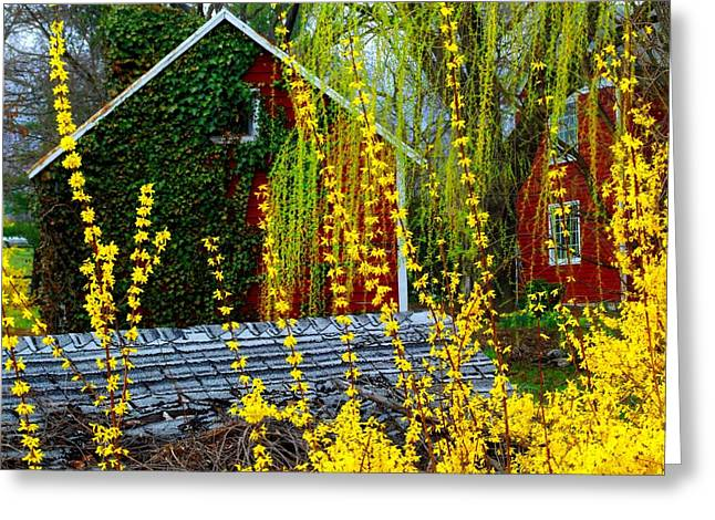 Yellow Weeds Greeting Card by Michael L Kimble