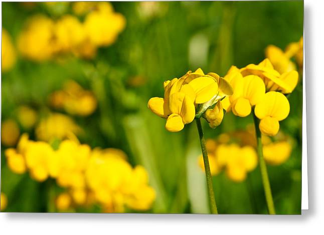 Yellow Wild Flowers Greeting Card by Edward Myers
