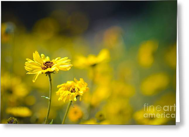 Greeting Card featuring the photograph Yellow Wild Flowers by Kelly Wade