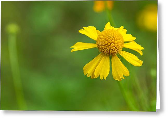 Yellow Wildflower Greeting Card
