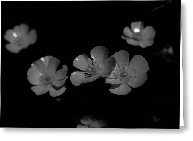 Yellow Wildflower In Black And White Greeting Card by Michelle  BarlondSmith