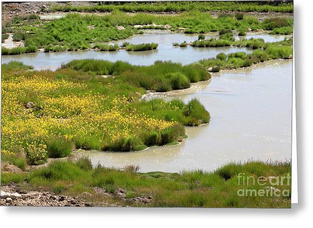 Yellow Wildflowers At Mud Volcano Area In Yellowstone National Park Greeting Card by Louise Heusinkveld