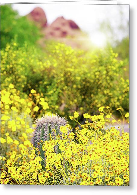 Yellow Wildflowers Cactus And Mountain In Arizona Greeting Card