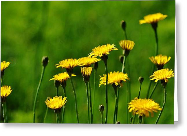 Yellow Wildflowers Greeting Card
