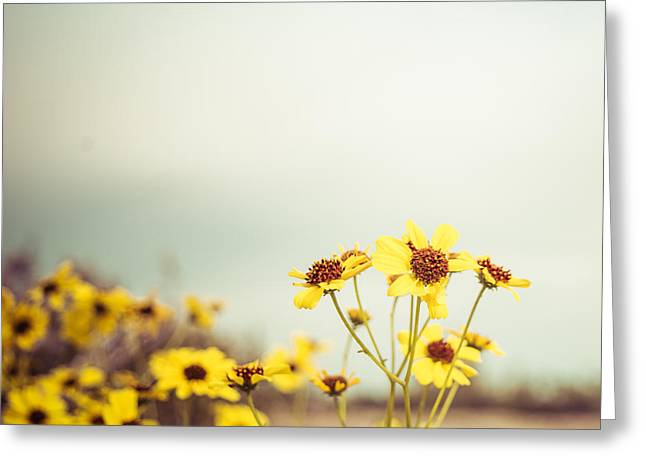 Yellow Wildflowers Greeting Card by Mary Hone