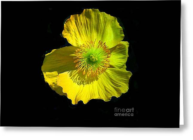 Yellow Windflower Greeting Card by ARTography by Pamela Smale Williams