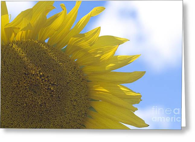 Yellowness Creates Happyness  Greeting Card by Tara Lynn