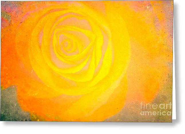 Yelloworange Rose Greeting Card by Kim Henderson