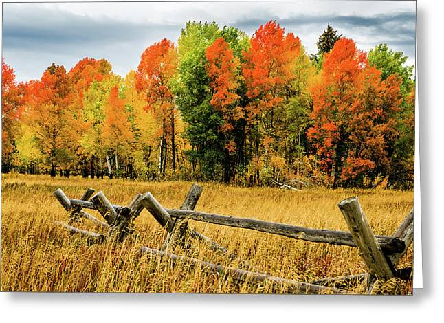 Yellowstone Autumn Greeting Card by TL Mair