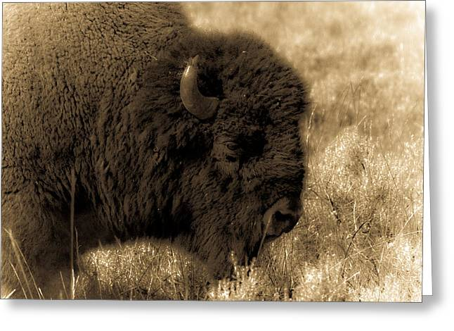 Yellowstone Bison Greeting Card by Patrick  Flynn